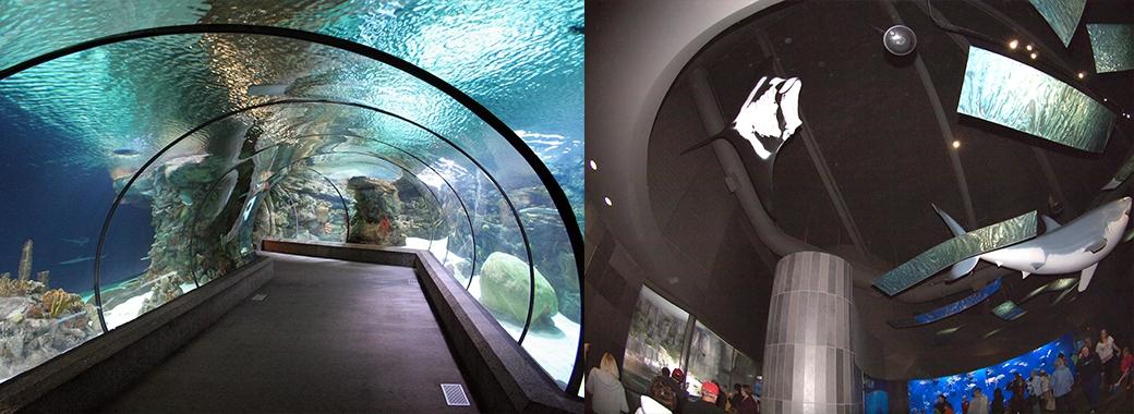 Suzanne & Walter Scott Aquarium Omaha, NE